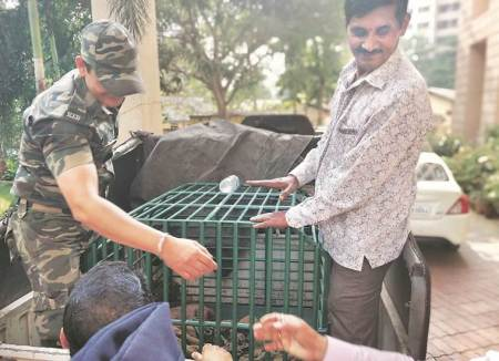 Thane: Two held for 'trying to sell' pangolin