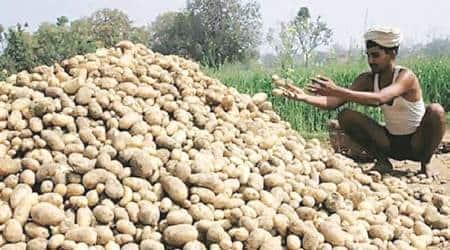 Potato, Potato farmers, Lays potato farmer, farmer corporates, PepsiCo farmers, contract farming initiative, contract farming, corporate farming, business news