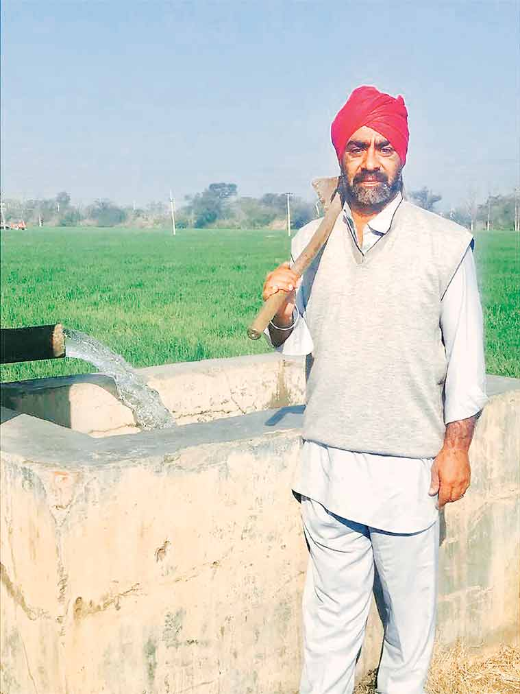 Sustainable Agriculture: Punjab has a new plan to move farmers away from water-guzzling paddy