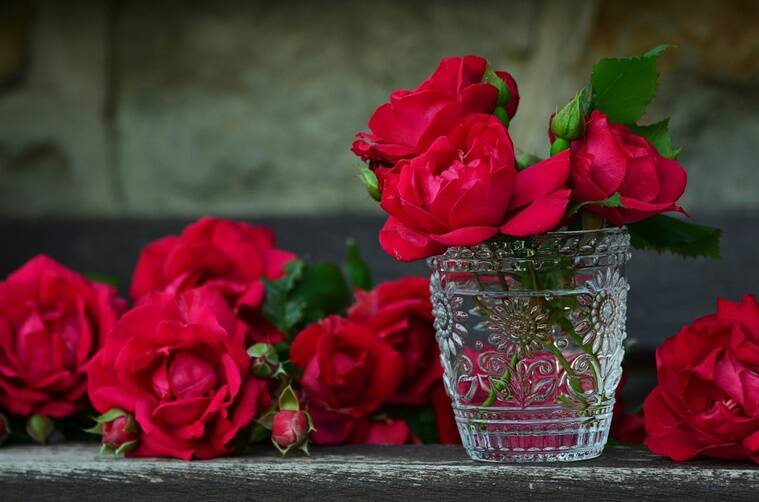 rose day, rose day wishes, rose day WhatsApp messages, rose day facebook messages