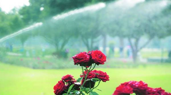 Chandigarh Rose Festival: Three companies show interest in organising helicopter rides