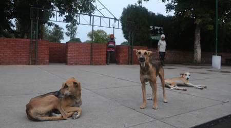 Sitapur: Seven-year-old, three others attacked bydogs
