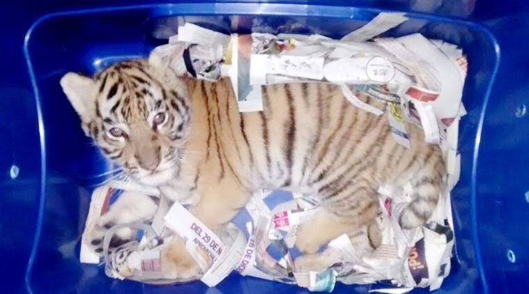 Mexico authorities catch animal traffickers trying to mail a tiger cub