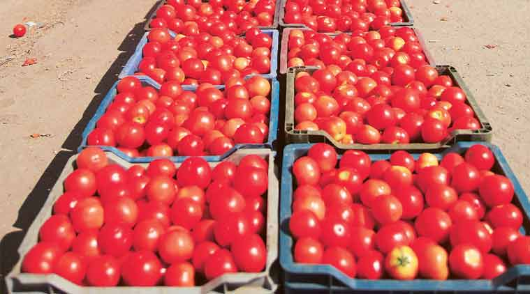 tomatoes, tomato prices, tomato prices pune, vegetable market, nashik, pune news, indian express news