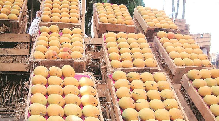 First batch of Alphonso mangoes leaves for Italy as