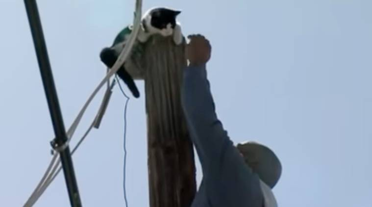 cat stuck on the pole, cat on pole, cat stuck on pole rescused, cat rescused by people, people rescue cat, indian express, indian express news