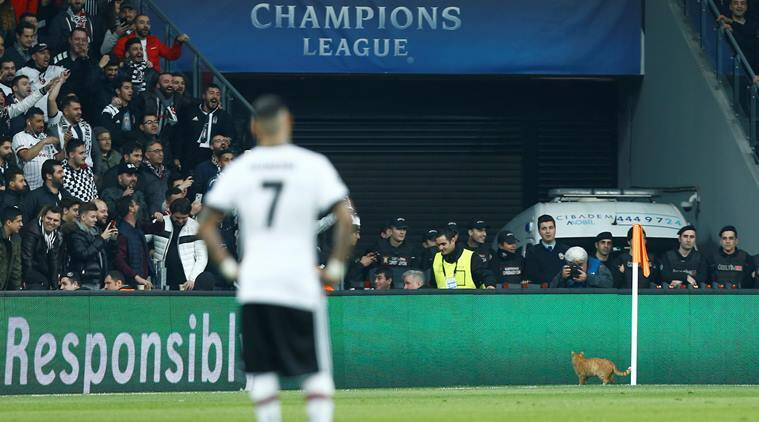 Besiktas face ban from UEFA for allowing cat on field