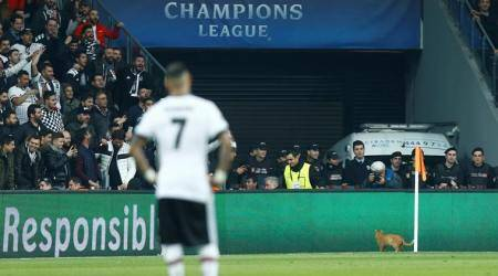 Stray cat could prompt Besiktas Champions League fine