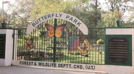 Chandigarh: Winged beauties give Butterfly Park a miss, so do visitors, authorities blamepollution