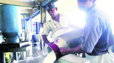 Maharashtra: Prices hit rock bottom, farmers to distribute free milk from May 3