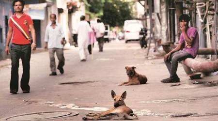 Rs 500 fine if your dog defecates in the open: SDMCproposal