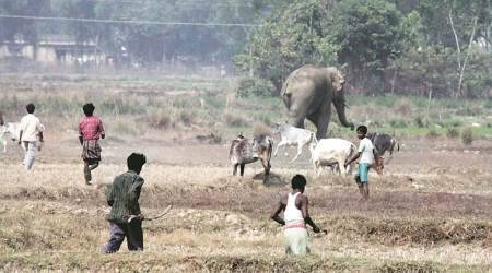 For the first time Bengal govt to use radio collars to study tusker herds, reduce conflict with humans