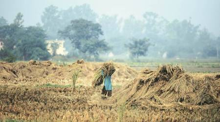Kurki banned, Punjab farmers face criminal cases for bank loan default