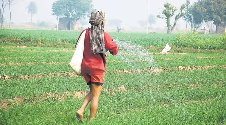 fertiliser subsidy payments, fertiliser subsidy, farmer fertilizer, Urea, Urea subsidy, Urea price, fertiliser gst, india news, indian express