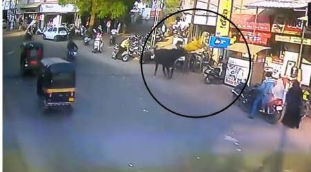 WATCH: The terrifying moment when a BULL tossed a WOMAN into air in Gujarat