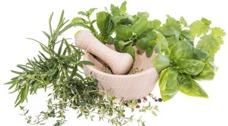 CIMAP lucknow, Covid 19 disease, herbal products, Pune news, indian express news