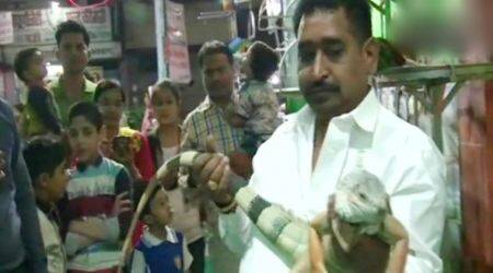 VIDEO: Shop owner from Indore pays Rs 2 lakhs for a pair of pet iguanas