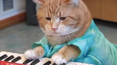 VIDEO: Feline star Keyboard Cat breathes its last; Netizens remember the 'musical legend'