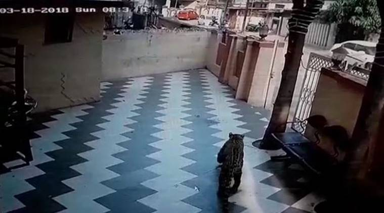 Residents of the multi-storeyed building in Bhatiya Chowk were alerted by security guards, of a nearby tutorial class, who spotted the animal.