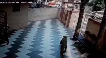 Leopard enters residential building in Thane, rescued later by forest officials