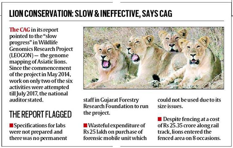 cag report, gujarat, lion population, gir animal sanctuary, protected wildlife habitat, indian express