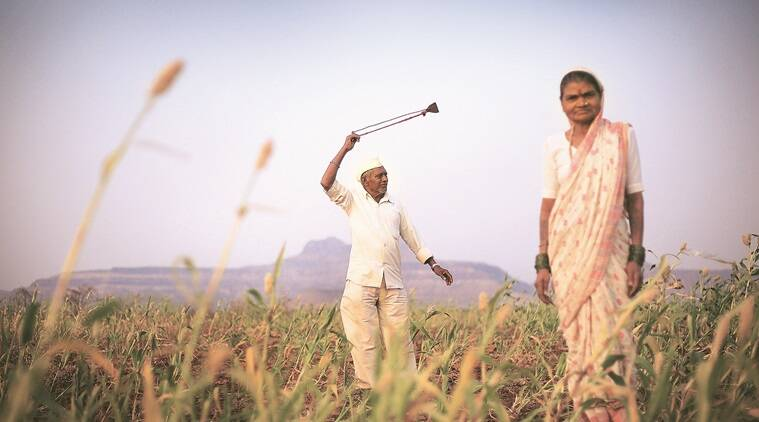 Starting this kharif season, agriculture dept to monitor pest infesting jowar, sugarcane