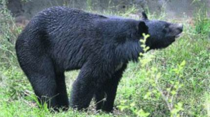 Rescued bear cub finds new home at Arunachalzoo