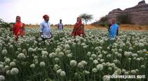 Farmers affected by Feb hailstorms given Rs 313 crore: Maharashtra Revenueminister