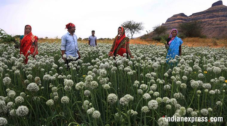 Farmers affected by Feb hailstorms given Rs 313 crore: Maharashtra Revenue minister