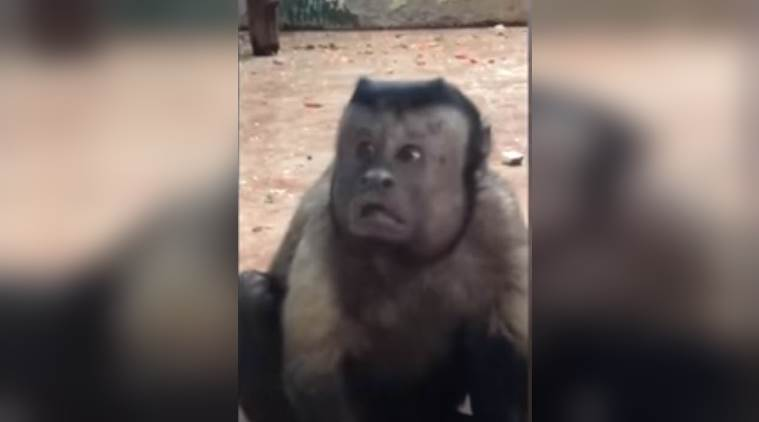 viral videos, monkey human face, monejy with human face viral video, monkey human face china video, indian express, indian express news