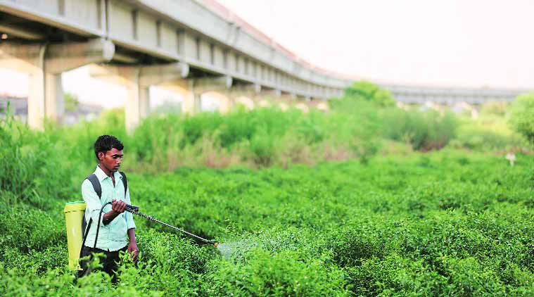 Pesticide Management Bill, Indian farmers, india farmers, pesticides death, Farmers suicide, pesticides in market, indian express