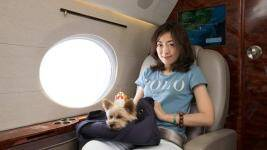 Pets on jets: Luxury travel agency pampers pooches