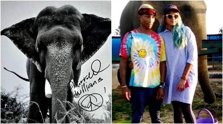 Pharrell Williams, Pharrell Williams visits India, Pharrell Williams Wildlife SOS, Elephant Conservation and Care Center, Pharrell Williams visits elephants, Indian express, Indian express news
