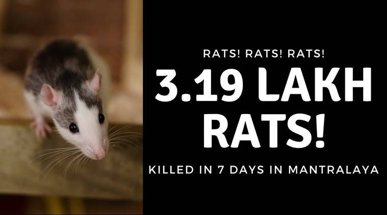 3.19 lakh rats killed in 7 days, eknath khadse, mantralaya