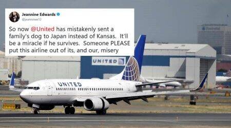 united airlines, united airlines dog, ua flight dog to japan, united airlines dog to japan, viral news, trending news, social media news, indian express