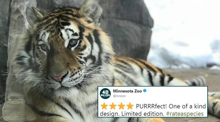 viral twitter thread, zoos reviewing animals, funny tweets about animals, funny tweets by zoos about animals, #rateaspecies, indian express, indian express news