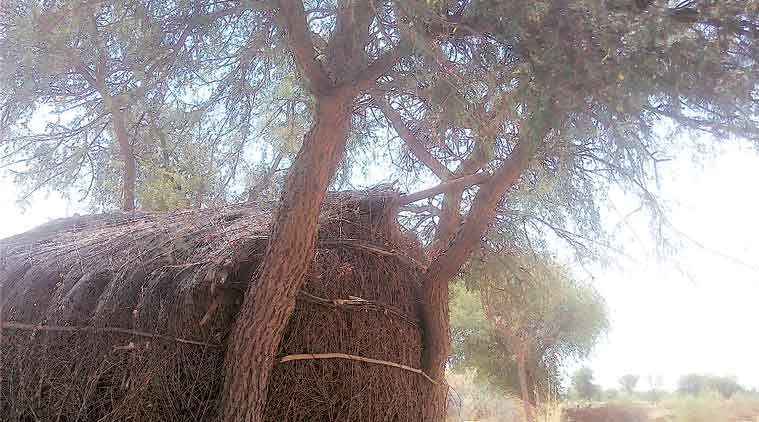 Three minors found hanging from tree in Barmer, cops say suicide, girls' families allege murder