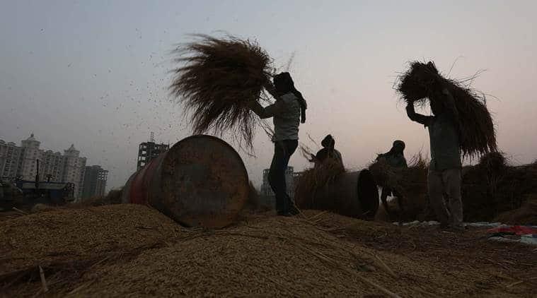 punjab, punjab farmers protest, punjab paddy farmers, paddy crop, paddy farmers, paddy farmers protest, agrarian crisis