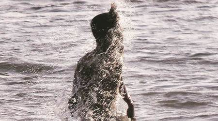 Mumbai: Hotter days ahead, mercury set to touch 38 degs Celsius