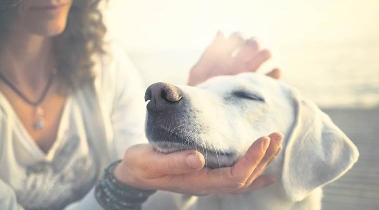pet care in summer, dog care in summer, stray dogs care, animal care in heat, indian express, indian express news