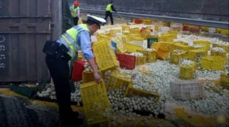 VIDEO: Oops! 1 lakh eggs get crushed after truck rolls over; costs around Rs 8 lakh