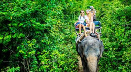 SHOCKING! Blind elephants used for joyrides at popular tourist fort sites