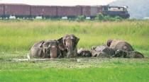 Forest guard trampled to death by herd of elephants in Karnataka