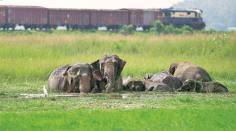 Increase in infrastructure impacting existence of elephants: UN
