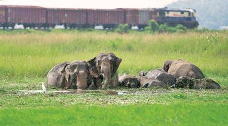 In Fact: Why trains keep killing elephants