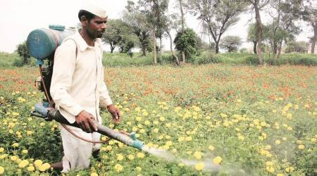 Maharshtra government to deploy drones to spray insecticide on cotton crop