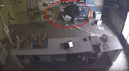 Video: CLUMSY thief HIT his head while STEALING from a doughnut shop
