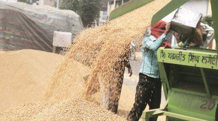 Wheat procurement: 'Tendering process in 401 clusters completed'