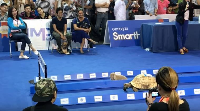 Tortoise and Hare, Tortoise and Hare story, Tortoise and Hare childhood story, Tortoise and Hare school story, Tortoise and Hare race video, Tortoise and Hare viral race video, indian express