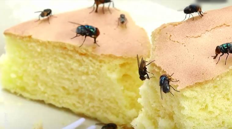 fly on food, health effects of fly on food, what happens when there is a fly on your food, fly on food, indian express, indian express news